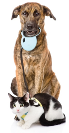 hemp-dog-and-cat.png